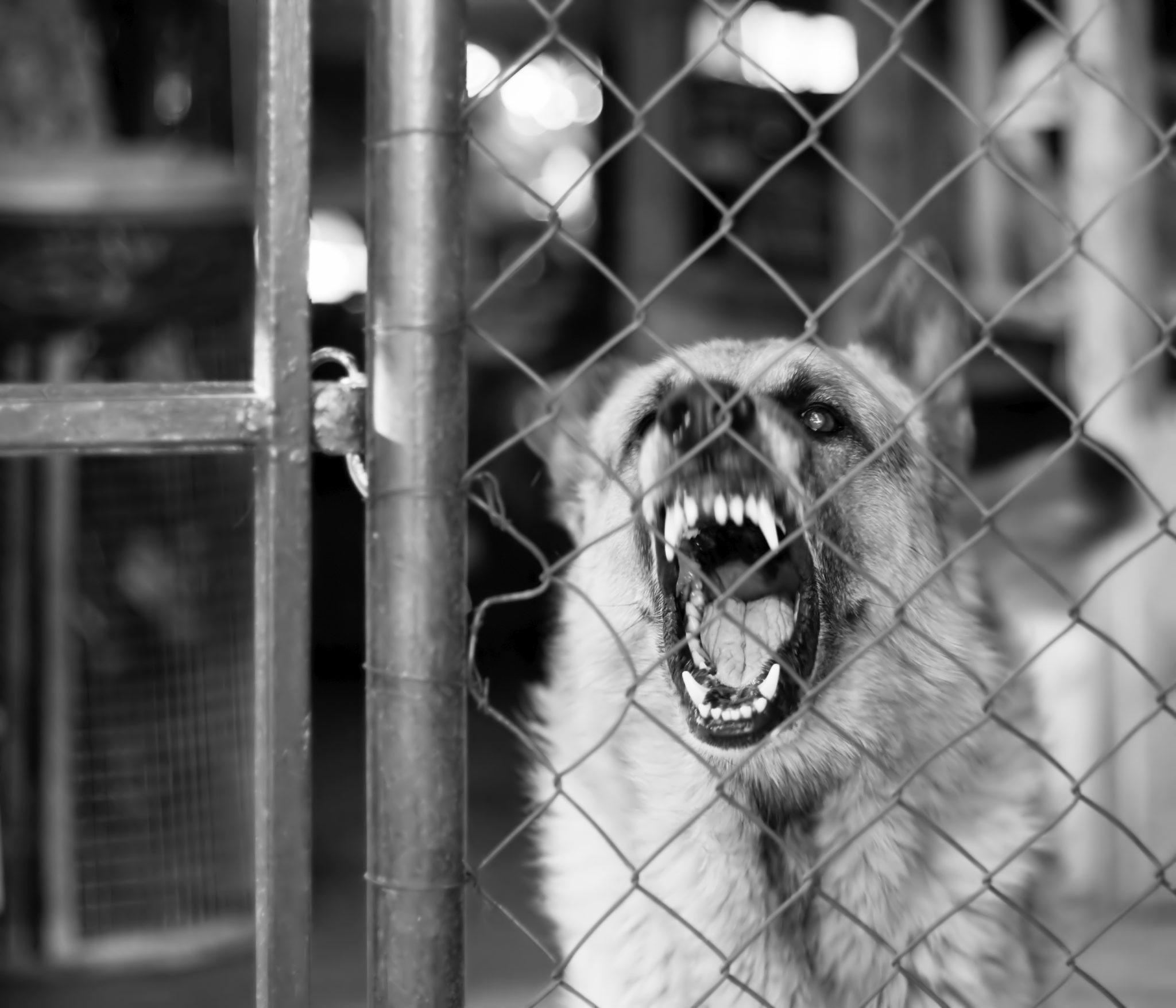 Guard Dog Training Ohio